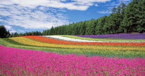 flowers-1517927786012-1594034137246.jpg