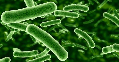 e-coli-bacteria-eat-co2-1575306907986.jpg