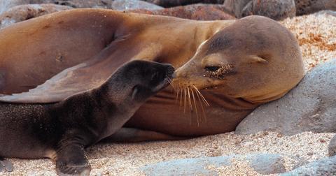 sea lion pup new zealand