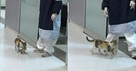 featured-cat-hospital-1588345801661-1588355481967.jpg