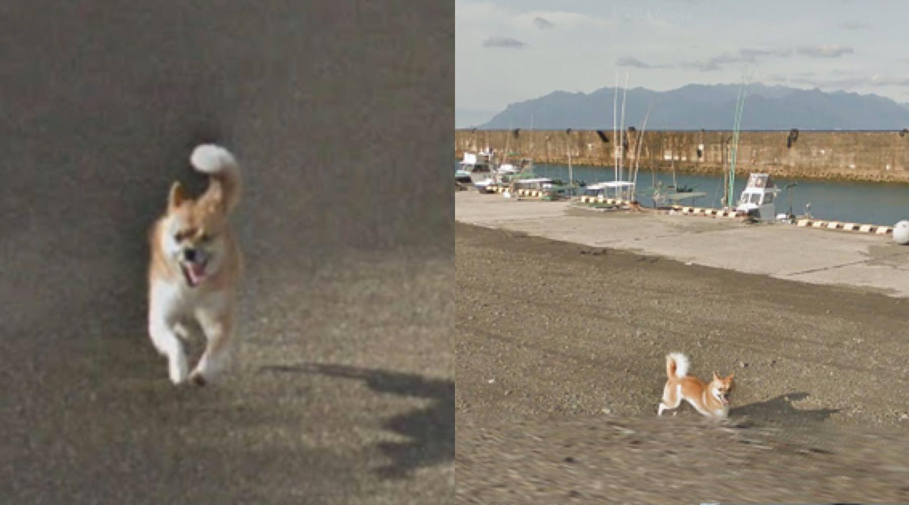 This little dog 'ruined' every frame of a Google Street View by chasing the camera