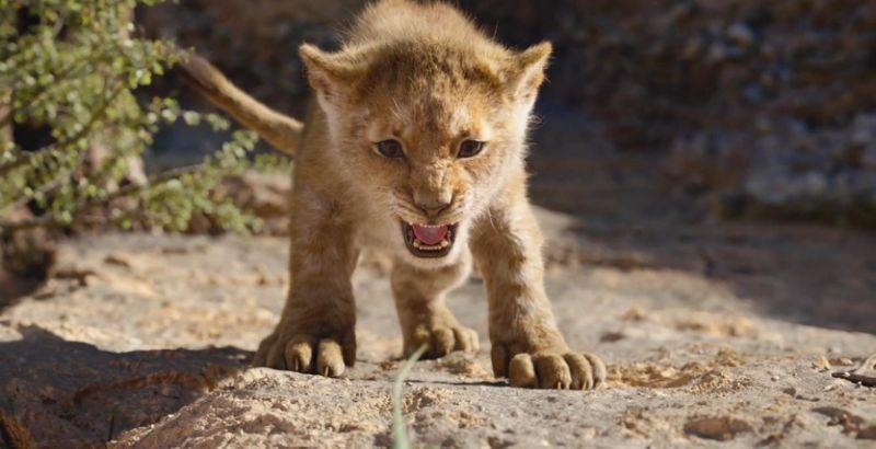 5-lion-king-1580916796116-1580918838801.jpg