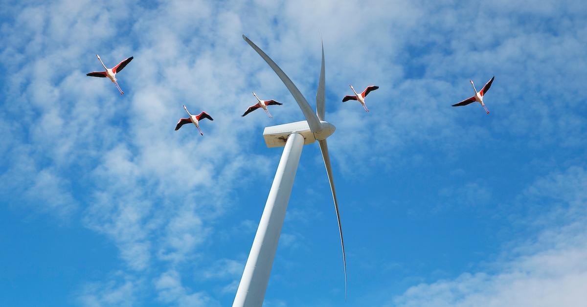 wind turbines birds paint