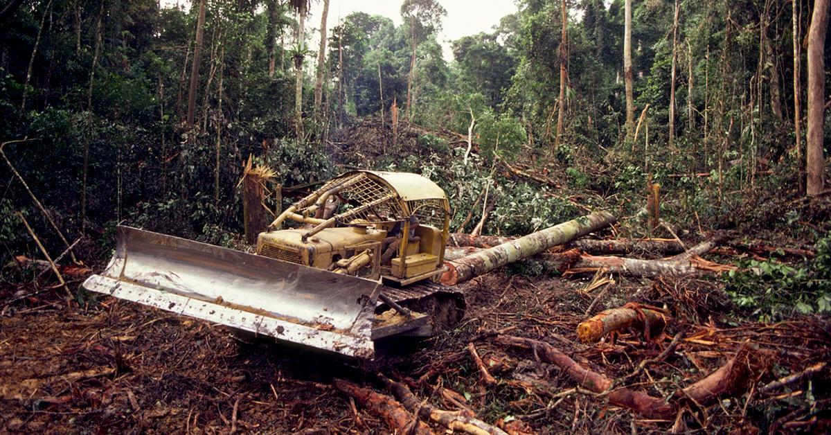 deforestation-jane-gooddall-1580410453258-1580477828374.jpg