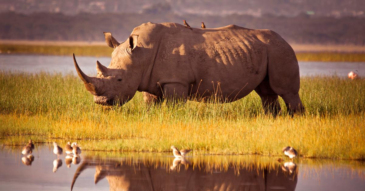 fake-rhino-horn-stop-poaching-1573490991513.jpg