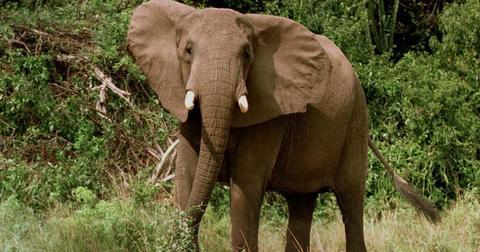 elephant-poacher-1598541687942-1598621114498.jpg