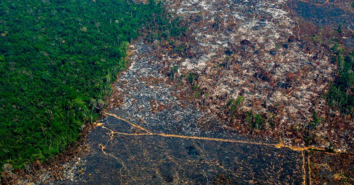 amazon-rainforest-deforestation-increase-1574182083482.jpg