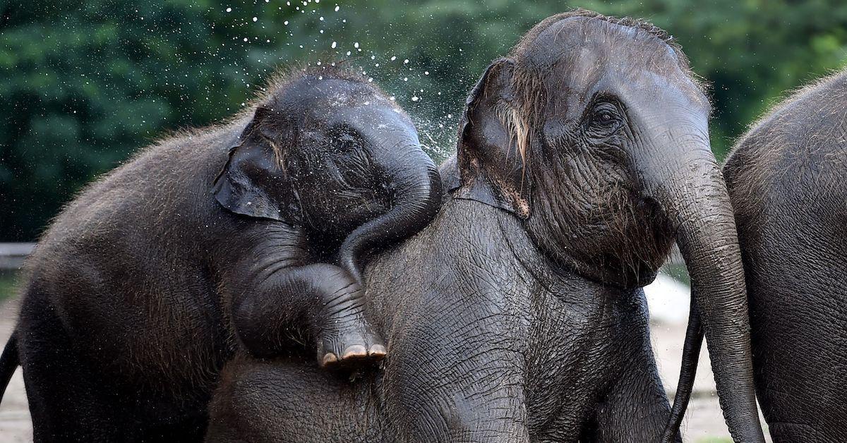 denmark-circus-elephants-retire-1572620820479.jpg