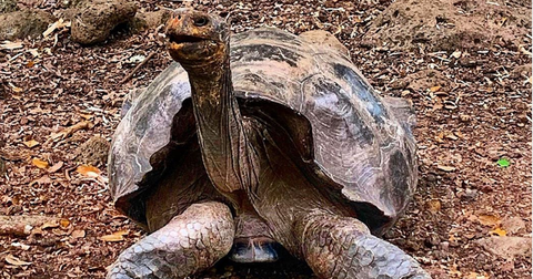 diego-tortoise-galapagos-1592334978627-1592481487582.png