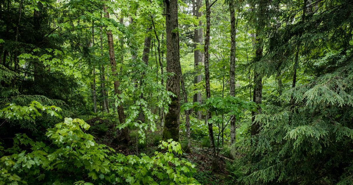 hungary plant trees climate policy