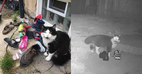 featured-cat-burglar-1597784608647-1597855908304.jpg