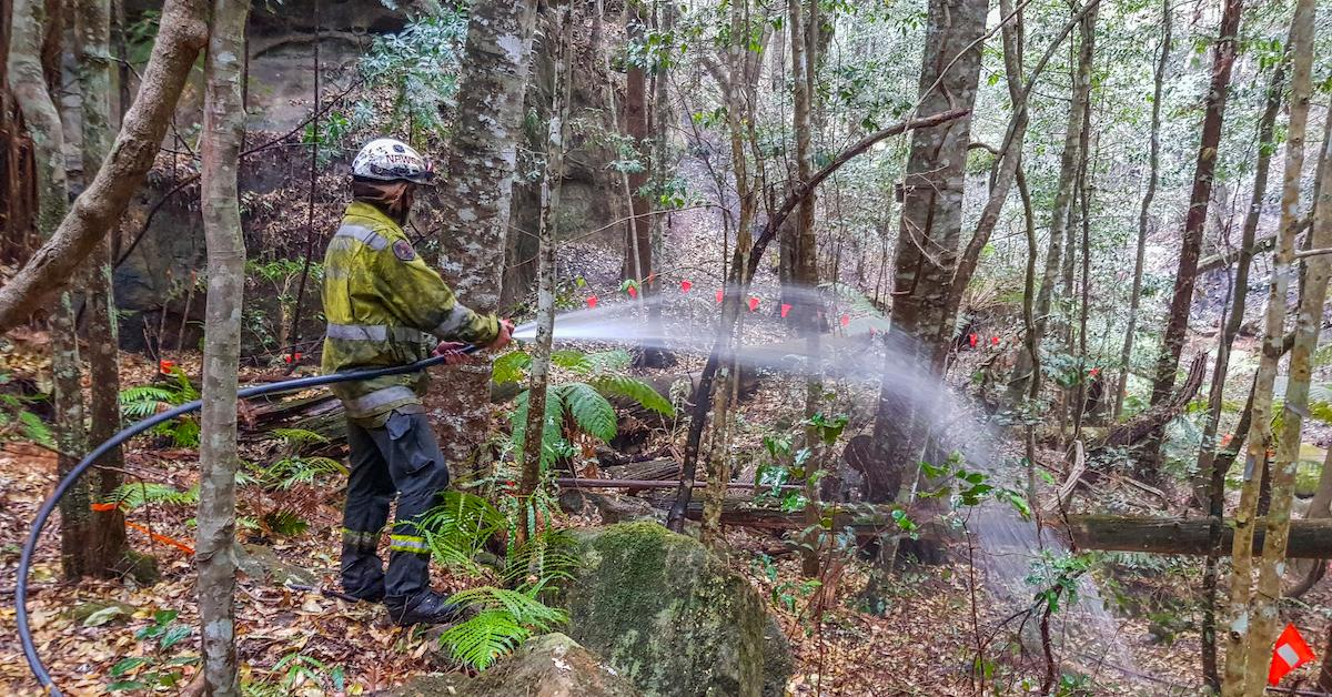 australian firefighters wollemi pine trees fires