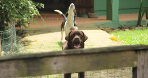 5-barking-dogs-1569943678266-1576247012327.jpg