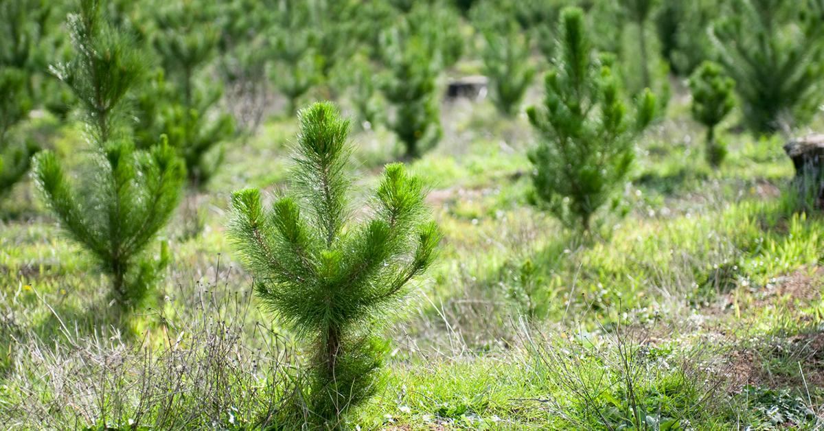 replanting-trees-forest-1580410481546-1580477849045.jpg