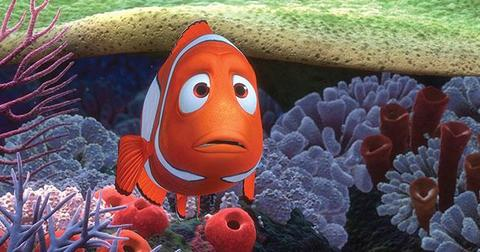 what-is-finding-nemo-really-about-1-1601999041508-1602073842783.jpg