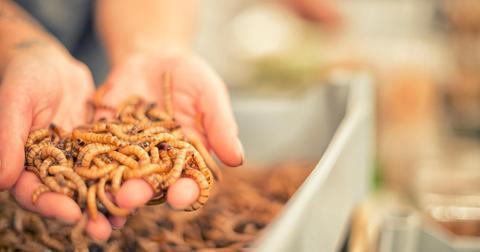 super-worm-1595353271078-1595589011457.jpg