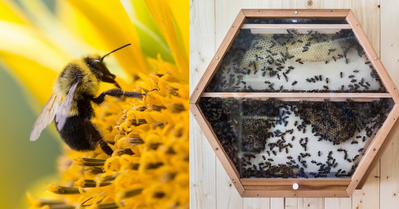 Bees declared Earth's most important species — how to protect them