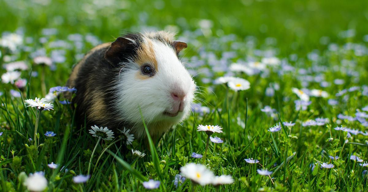 california animal testing