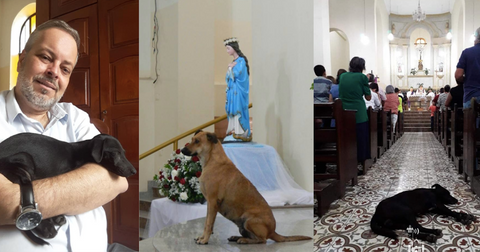 featured-priest-dogs-1571930638554.jpg