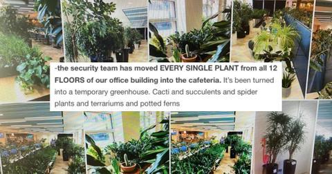 featured-office-plants-1599148050716-1599219454765.jpg