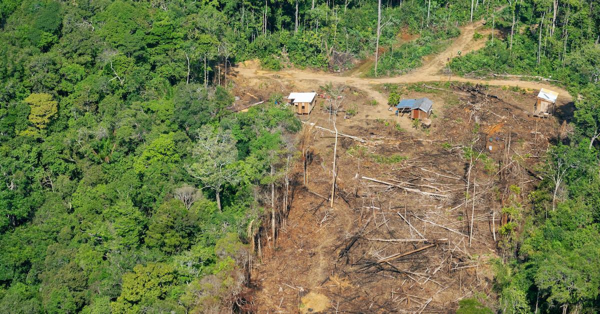 amazon-deforestation-2-1576515336547.jpg