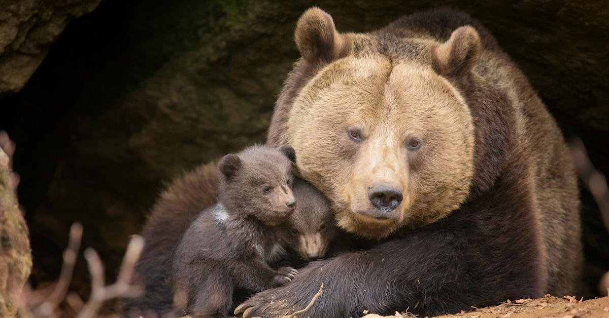 trump administration wildlife cruelty
