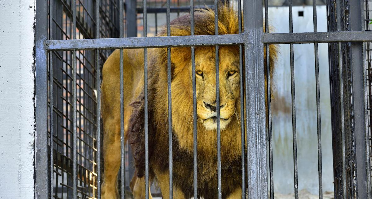 france wild animals traveling circus