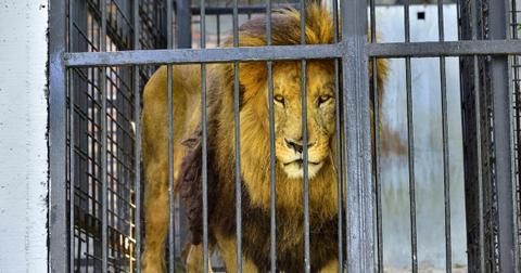 france-wild-animals-traveling-circus-1601491295254-1601641417355.jpg
