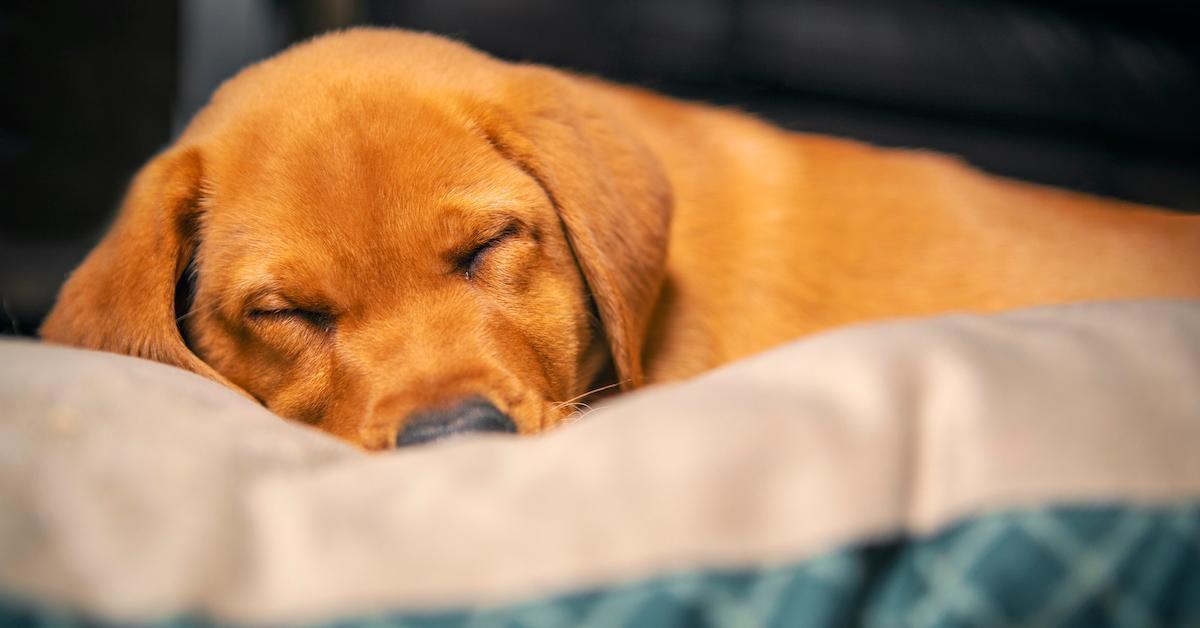 new york bans puppy mills