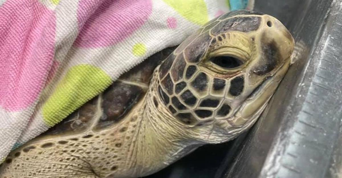 freezing sea turtle rescue cover