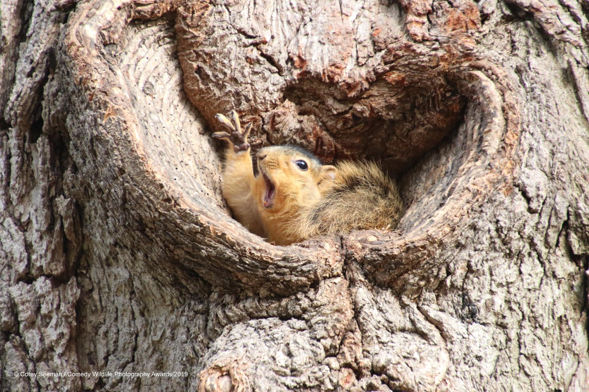 5-corey-seeman_who-would-like-a-peanut-squirrels-at-the-university-of-michigan_00003651-1568311185439-1574771723099.jpg
