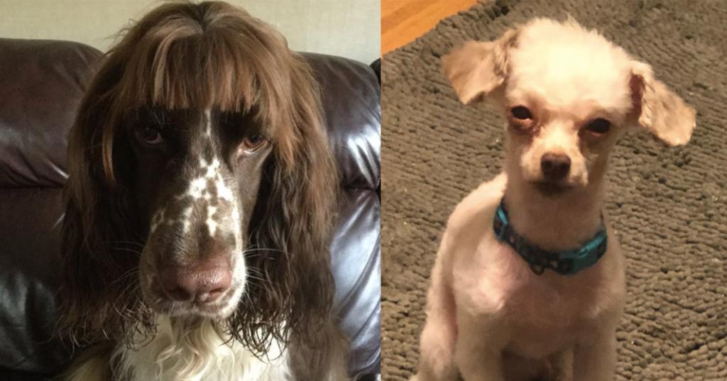 featured-dog-haircuts-1588866847469-1588941983456.jpg