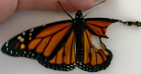 cover-butterfly-1515784371588-1576860001904.jpg