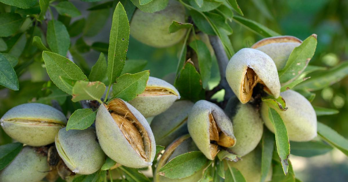 almond-milk-honey-1578604858843.jpg