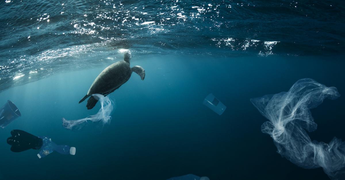 sea turtles plastic study