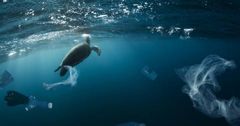 sea-turtles-plastic-study-1583953078639.jpg