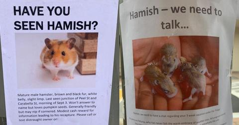 featured hamster posters