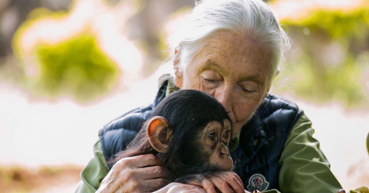 jane-goodall-chimp-1575919306423.jpg