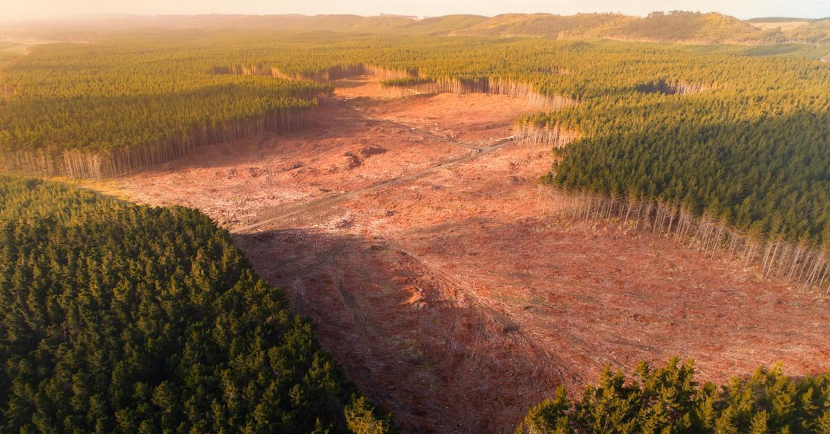 deforestation pandemics