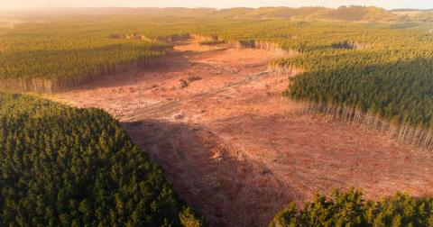 deforestation-pandemics-1592506890461-1592840964303.jpg
