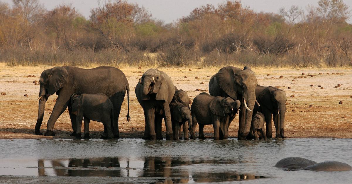 zimbabwe-game-park-1571844492626.jpg