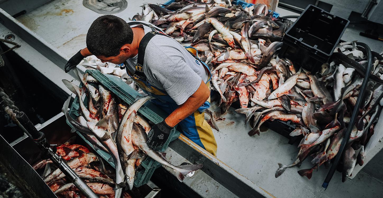 gm thumb commercialfishing