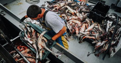 gm-thumb-commercialfishing-1591710132253-1591717538266.jpg